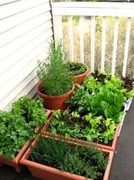 How To Make An Urban Garden - 27 best gardening small places images on pinterest gardening
