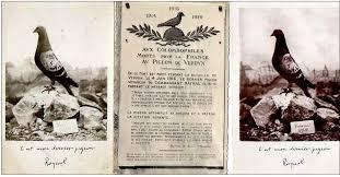 cuisine des pigeons voyageurs messagerie par pigeons voyageurs colombophiles colombophilie