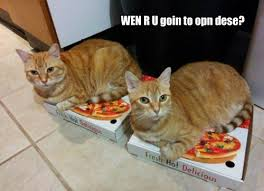Meme Pizza - lolcats pizza lol at funny cat memes funny cat pictures with