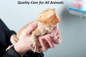 oceanside animal hospital sandwich ma cape cod veterinarians