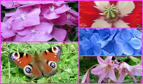 my summer garden flowers butterflies bees birds and my kitty