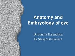 Anatomy Of Human Eye Ppt Ppt Anatomy And Embryology Of Eye Powerpoint Presentation Id