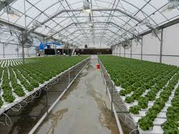 socker greenhouse nexus greenhouse systems markets controlled environment