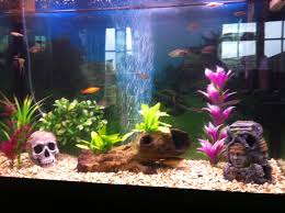 fish tank good first fish for your home aquariumcalfishaquarium