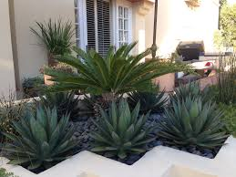 Unique Planters For Succulents by Newport Beach Modern Planter Blue Glow Agave Sago Palm Drought