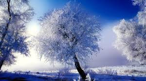 wallpaper desktop winter scenes winter scenes desktop backgrounds gallery 79 plus pic wpw509582