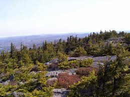 New Hampshire vegetaion images High elevation spruce fir forest monadnock mountain monadnock jpg