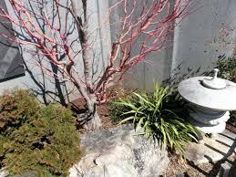 Winter Gardening Ideas Winter Gardening Tips Large Size Of Garden Gardening Ideas Patio