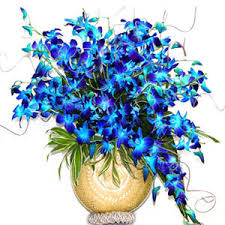 Blue Orchid Flower Gifts Delivery To Mumbai Flowers To Mumbai Cakes To Mumbai