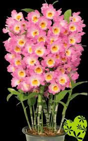 imagenes flores bellisimas estas bellas flores son para ti new multimedia