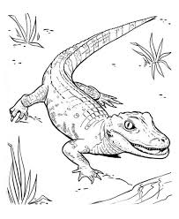 alligator coloring page kids alligator coloring page sketch