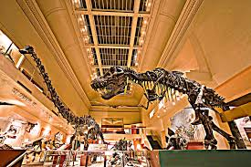 how do you dismantle a dinosaur smithsonian insider