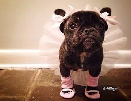 240 best cute pet costumes images on pinterest pet costumes