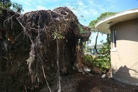 after irma topples tree home sale may be with the wind