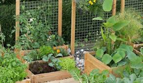 small vegetable garden ideas designs very back design of for your