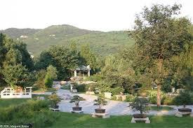 Beijing Botanical Garden Bonsai Garden Beijing Botanical Gardens 6