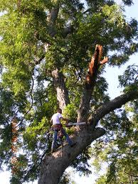 tree repair by our tree care doctor protect your trees white