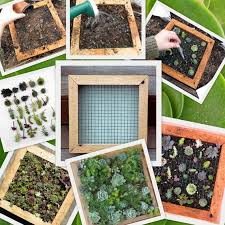 succulent living wall art vertical picture kit buy this or we