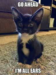 Cute Kittens Meme - 1204 best meme images on pinterest funny images funny animal
