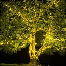 outdoor tree lights for summer how to string lights on outdoor tree branches modern looks tree