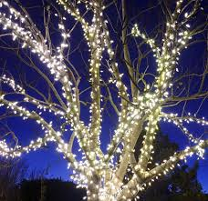 How To String Lights On Outdoor Tree Branches by 32 Best Outdoor Christmas Decorations Christmas Yard Decorating