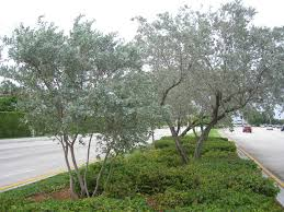 native south florida plants sustainscape florida sustainable non toxic all natural