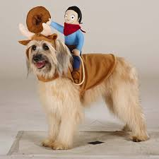 pet costume halloween 47 halloween costumes for your dog thefashionspot