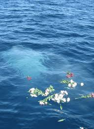 scattering ashes at sea serenity at sea dignified scattering of cremated remains ashes