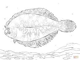 bigeye flounder coloring page free printable coloring pages