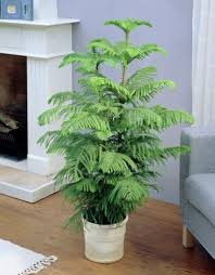the tropical guide to indoor plants part i u2013 idecorama