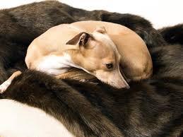Dog Blankets For Sofa by Luxury Dog Blankets U0026 Sofa Throws U2014 Charley Chau Luxury Dog Beds
