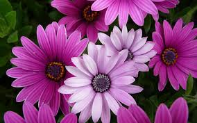 purple flowers 14071 1920x1200 px hdwallsource com