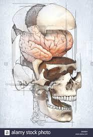 Human Anatomy Martini 199 Best Anatomy And Medical Illustration Images On Pinterest
