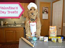 goldendoodle puppy treats 276 best spencer the goldendoodle images on a