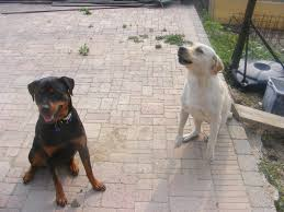 how to stop a dog from excitedly lunging towards other dogs