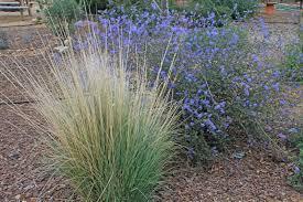 desert landscaping plants archives az landscape creations