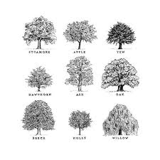 brilliant architecture drawing of trees n intended design decorating