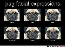 Sad Pug Meme - pug facial expressions what people think i do what i really do