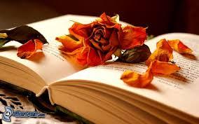 Drying Flowers In Books - dry flower