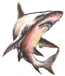 great white shark sketch great white shark sketch 1 by u003dsteeljaw