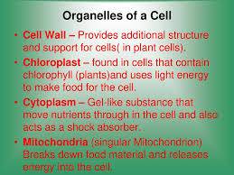 which plant cell organelle uses light energy to produce sugar cells structure and function ppt video online download