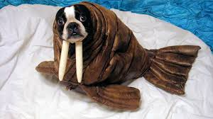 Ewok Dog Halloween Costume Adorable Diy Pet Costumes Landeelu