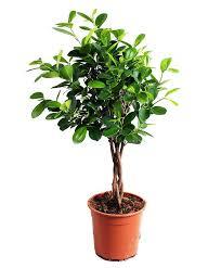 buy house plants now u0027moclame u0027 bakker com