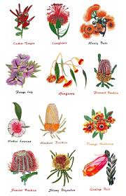 australian native plants guide west australian wildflowers by outback embroidery out waw outback