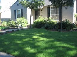 Alternative To Grass In Backyard by Page 17
