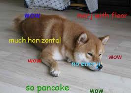 doge meme the best of doge