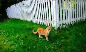 How To Keep Cats Out Of Your Backyard How To Keep Cats Off Your Lawn With Deep Learning Nvidia Blog