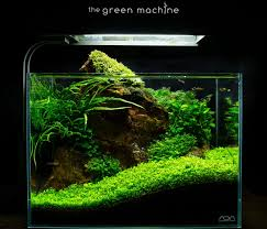 Aquascaping Freshwater Aquarium Red Rock Aquascape Journal By James Findley The Green Machine