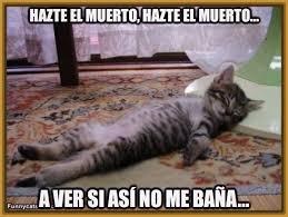 imagenes chistosas y tiernas descargar imagenes de gatos con frases graciosas archivos gatitos