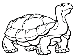 yertle turtle coloring pages free explore green sea turtles